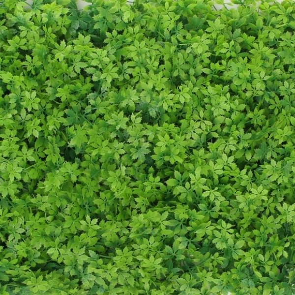 [GTS40498] 숲인테리어 초록풀밭 벽장식 인조잔디(60x40cm)